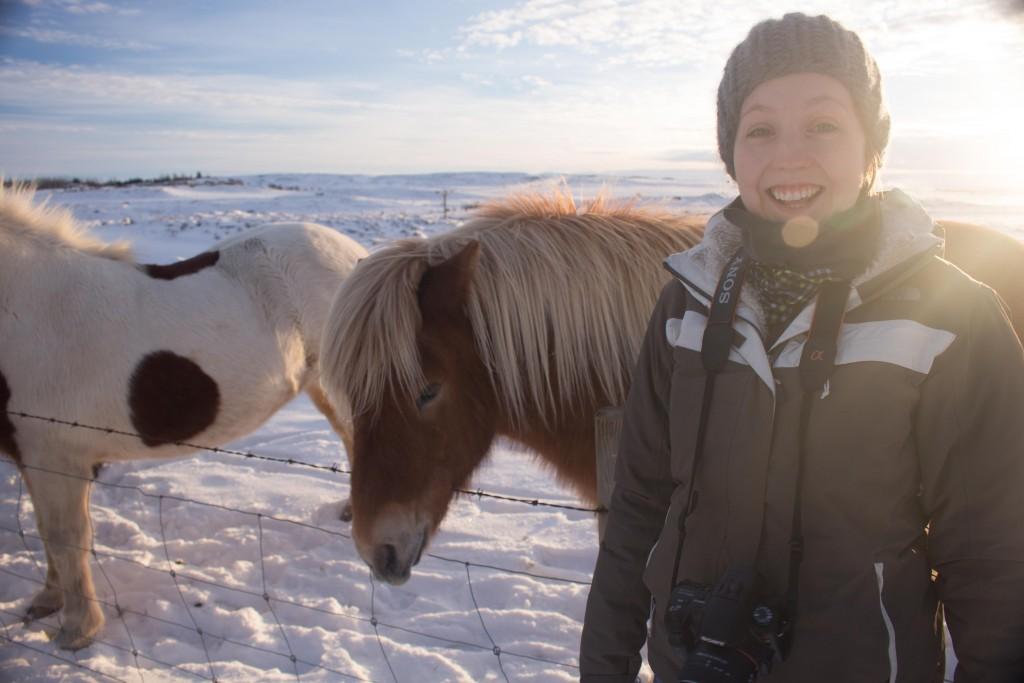 Feeding Icelandic horses in Iceland - Shortrounds