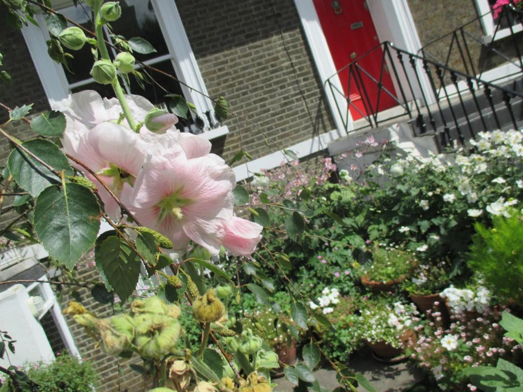 Notting Hill garden in bloom - Shortrounds Knitwear