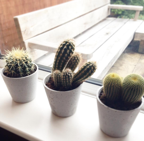 Cacti trio - Spike, Hodor & Cahuna | Shortrounds Knitwear